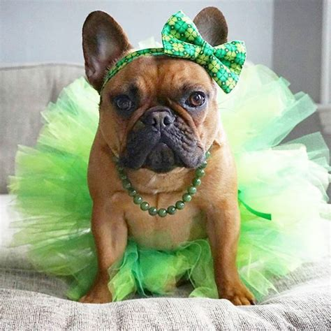 puppies dressed up 25 best ideas about dressed up dogs on dogs husky we it and