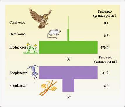 prueba de cadenas y tramas alimentarias ple biology 2 0 pir 193 mides ecol 211 gicas