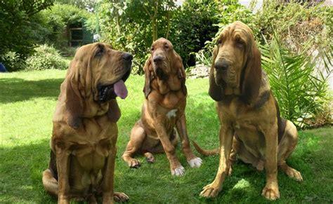 Bad Beware Of The Running T1910 4 adiestrador canino page 6 perro obediente