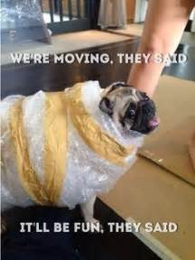 Moving Meme Pictures - 1000 images about moving house memes on pinterest blame