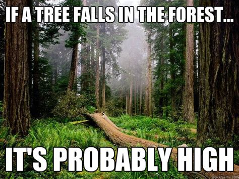 if a tree falls in the forest on the border between the deaf and hearing worlds books forest mountains tree memes