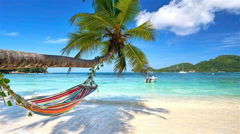 wallpaper turquoise beach palm  travel