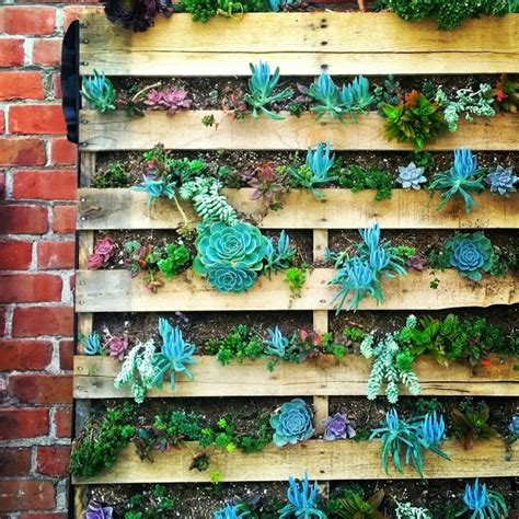 succulent garden wall 35 succulent gardening ideas for small creative container