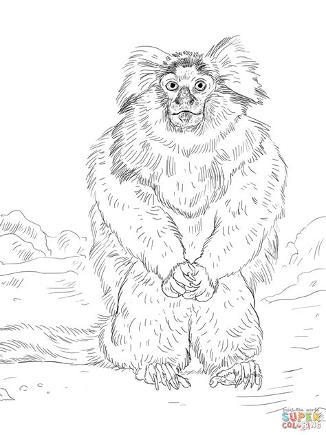 marmoset monkey coloring page common marmoset coloring online super coloring