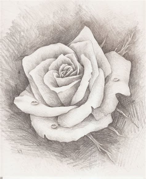 pencil drawings charcoal drawings and art galleries rose pencil drawing roses drawing art gallery