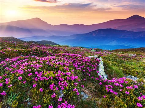 nature landscape beautiful mountain flowers  purple colored rocks green grass sun rays
