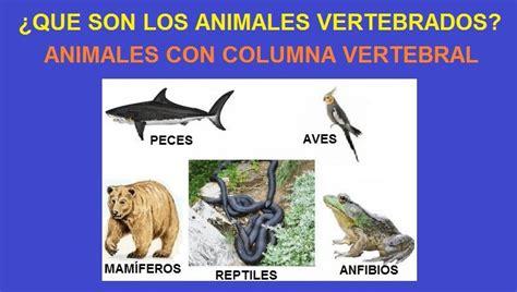 los animales vertebrados blog del prof jos 201 rivera vertebrados web