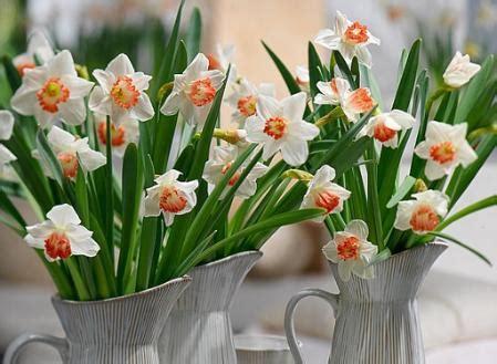 fiori primaverili da balcone 10 fiori primaverili da balcone narciso