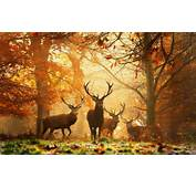 Nature Animals HD Wallpapers 2014