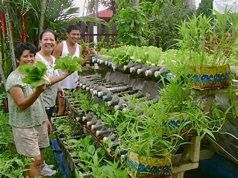 Backyard Hunger Solution For The Hunger Problem Food Production At Home