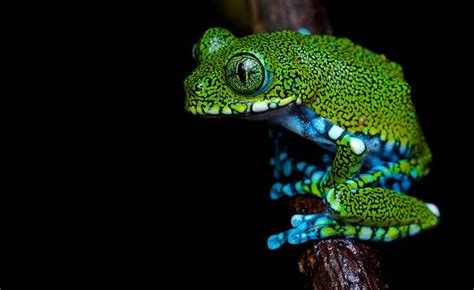 Espers Tree Vinyl - 411 best images about frogs on white trees