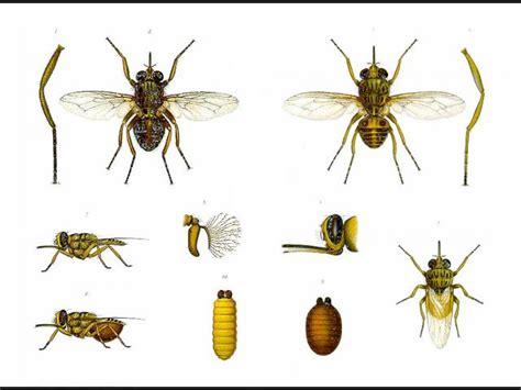 imagenes de vectores que transmiten enfermedades lista enfermedades transmitidas de animales a humanos