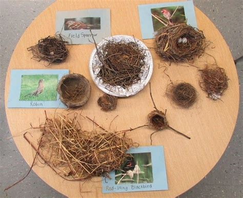 Do When You Build A Nest by Kindergarten Holding And Sticking Together Bird