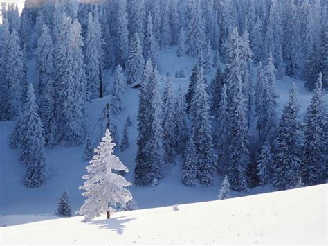 snow trees desktop wallpaper 224 nature beauty wallpapers
