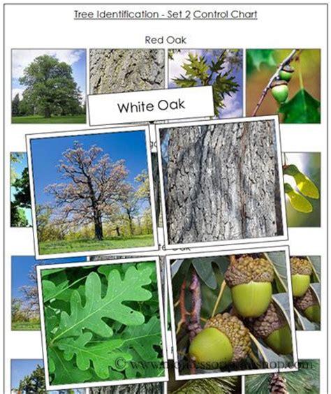 montessori tree printable 17 images about montessori science plants on pinterest