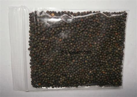 Berisi 100 Biji Benih Fennel berisi 50 biji benih kailan daftar update harga terbaru