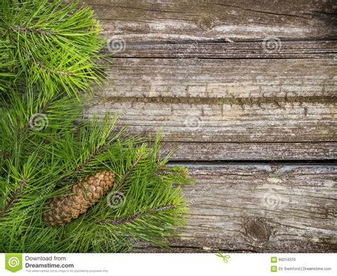 tree branch end pine tree branches on vintage wood stock photo image