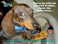 images   funny captions  pinterest cars facebook  dachshund rescue