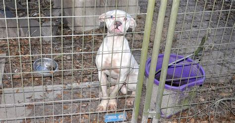 backyard breeders aspca backyard breeders aspca animal advocates issue warning on