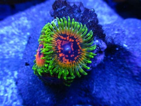 led lighting for zoanthids free raffle brand new kessil 360w e led light page 3