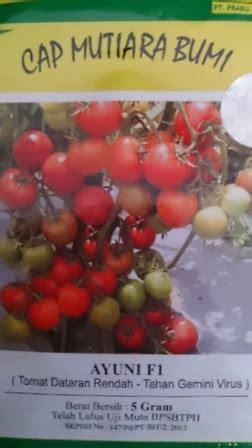 Bibit Benih Seeds Adenium Arabicum Cocok Untuk Daerah Panas lmga agro grosir belanja produk pertanian benih bibit pupuk pestisida harga murah benih