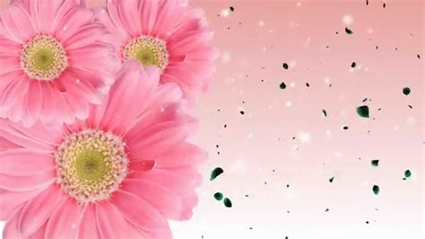 flower wallpaper moving animated flowers blooming background youtube