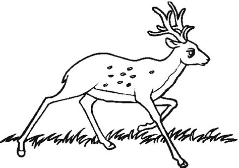 coloring pages of animals in the forest forest animal coloring pages bestofcoloring com