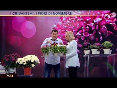 fiori a novembre fiori di novembre i crisantemi