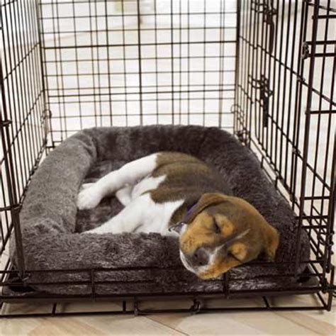 should puppy sleep in crate crate dogs for sale puppies for sale in ontario canada curious puppies