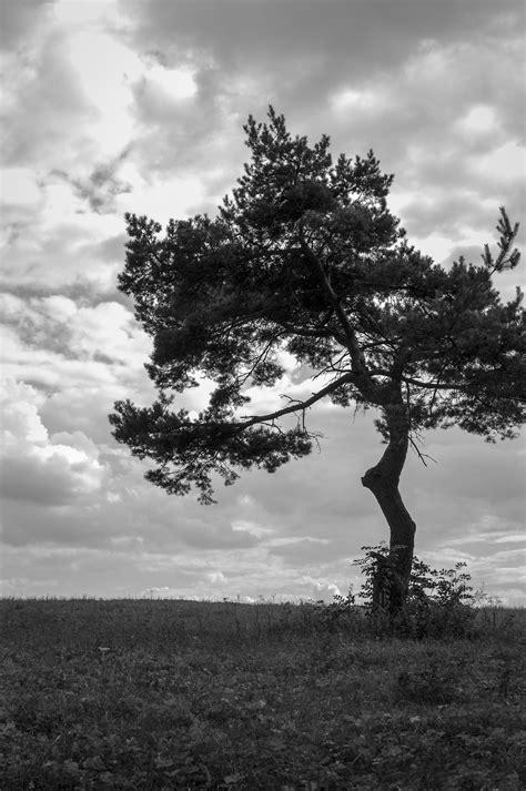 InFEA Olbia - Tempio - Scoperta dell'albero genealogico e