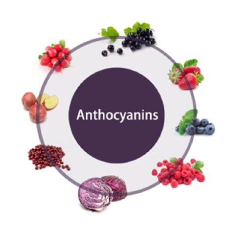 antocianine alimenti propriet 224 cavolo viola cambiare colore per farsi