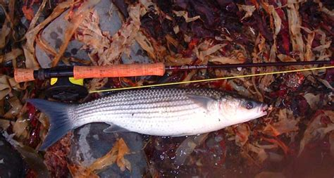 fish catcher anyfish affc 104 mike ladle s fishing diary