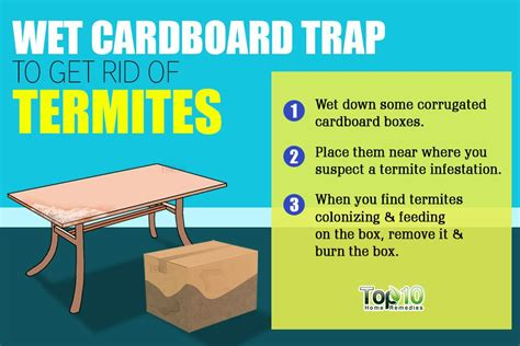 How To Get Rid Of Termites In Kitchen Cabinets How To Get Rid Of Termites In Kitchen Cabinets Mf Cabinets