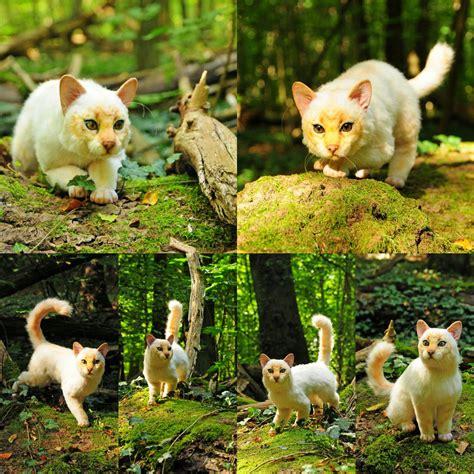 poseable doll poseable doll cat by fellkunst on deviantart