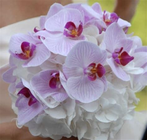 far fiorire le orchidee come coltivare le orchidee in casa donna fanpage