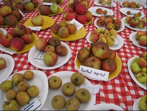 pomme haute de la pomme de normandie