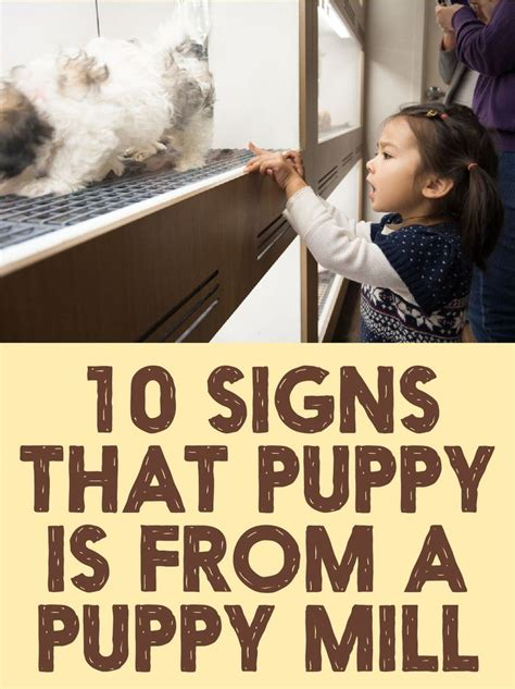 Mills Signs For With The 4 by 17 Best Images About Puppy Mills On Real