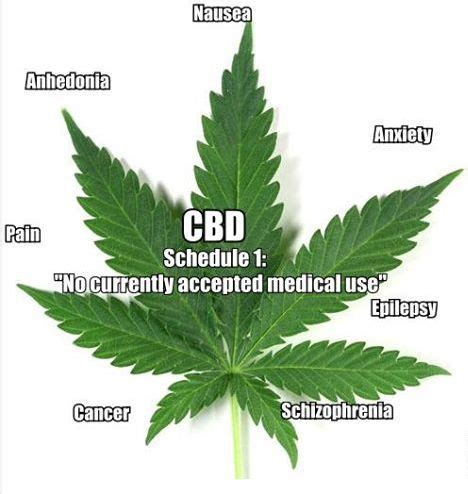 hemp cbd a primer on cannabinoids and cannabis medicine for better health books 17 best images about cbd from hemp on