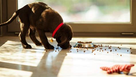 alimentazione corretta per cani agricola la corretta alimentazione il
