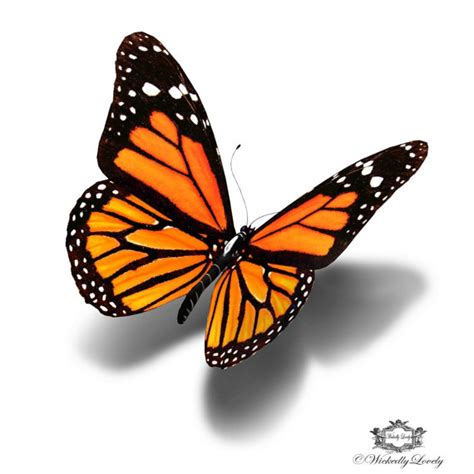 monarch butterfly 3d butterfly tattoo wickedly lovely skin