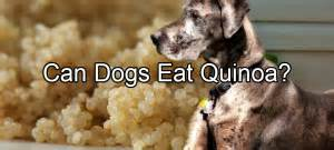 can dogs quinoa pethority the authority for all your pet needs