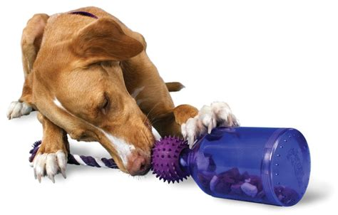 best puppy toys to keep them busy 8 of the best toys to keep pets entertained styletails