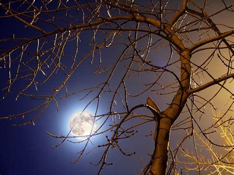 behr paint color clair de lune clair de lune color version by petitelutin on deviantart