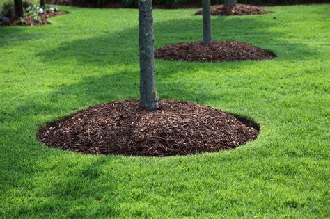 haircut garden city kansas weekly mowing has begun aspen lawn