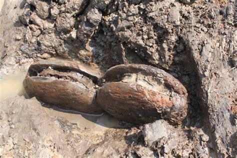schip wrak opmerkelijke vondsten bij opgraving scheepswrak dronten
