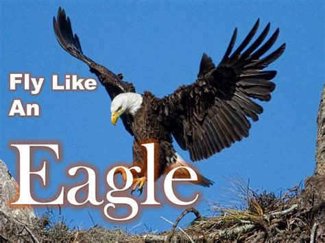 Fly An Eagle griff s mnf quot fly like an eagle quot nfl forums pregame