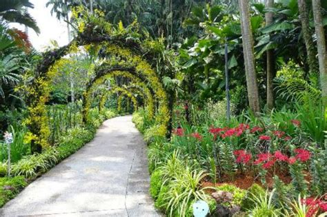 The Botanic Gardens Singapore Most Beautiful Botanical Gardens In The World Taste Tours