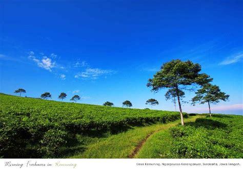 Teh Hijau Kemuning eksplorasi tempat wisata charlesppn99