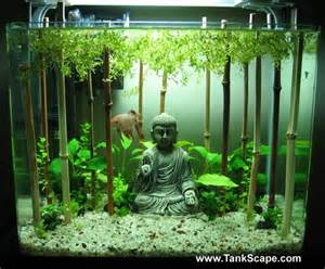 Japanese Aquascape Donnez 224 Votre Aquarium Un Style Asiatique