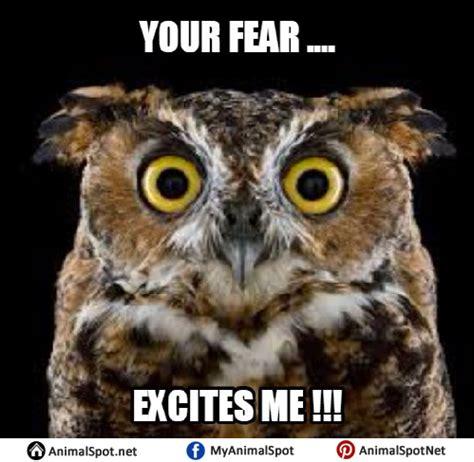 Who Owl Meme - owl memes